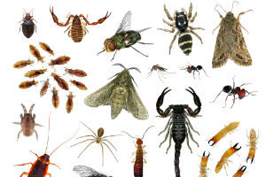 Most Common Insects